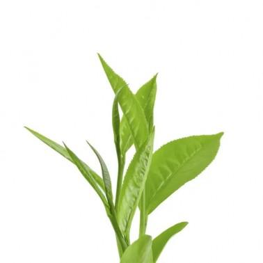 Shampoo GREEN TEA BIO-DETOX