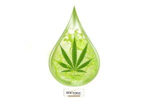 voltage cosmetics cannabis tratamiento cabello